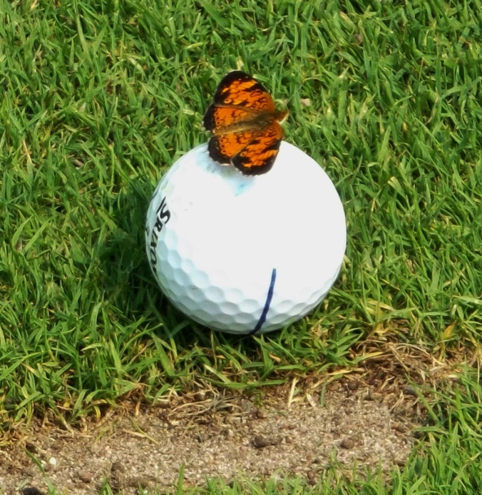 butterfly on ball1