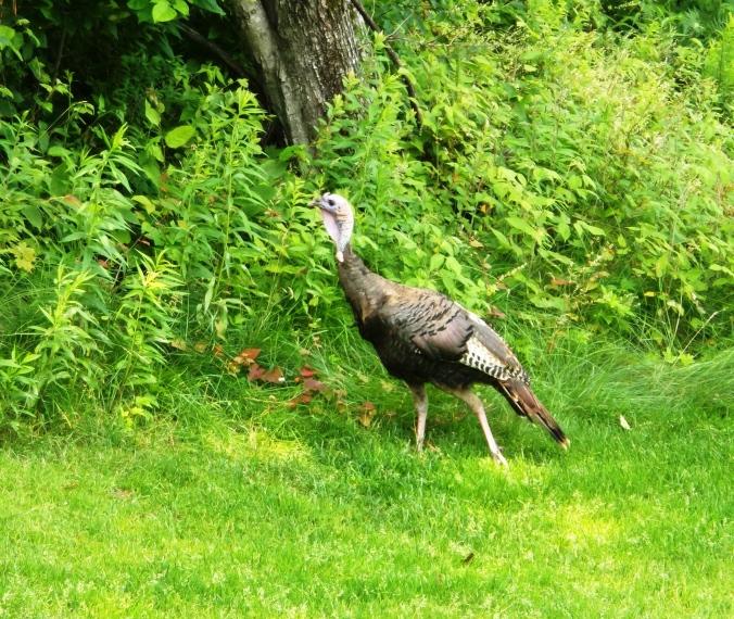 turkey on course