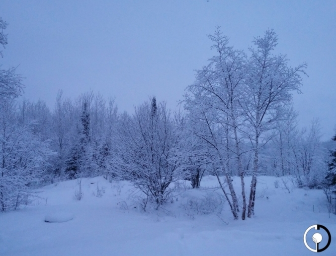 snow-covered-trees-1