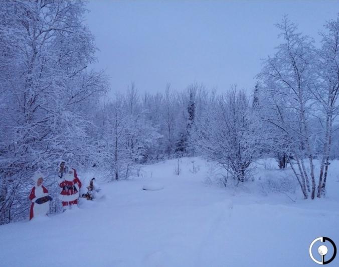 snow-trees-3